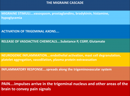 The migraine cascade
